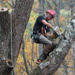What Is an Arborist?